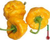 Pimenta Bunda De Velha Pimenta Jamaica Yellow frete gratis