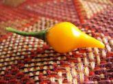Pimenta biquinho amarela frete gratis