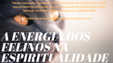 E-book exclusivo! A energia dos felinos na espiritualidade!