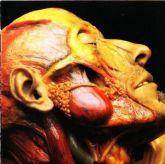 Lymphatic Phlegm - Show-Off Cadavers - The Anatomy of Self Display