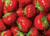 Papel Arroz Frutas A4 001 1un
