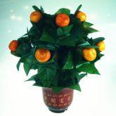 The orange tree illusion (pe de laranja)  #1228