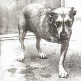 CD - Alice In Chains – Alice In Chains