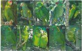 Série papagaios