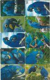 Série Arara azul
