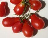 Tomate pera vermelho frete gratis