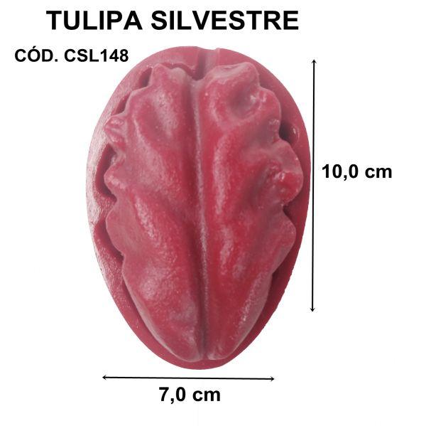 TULIPA SILVESTRE GRANDE