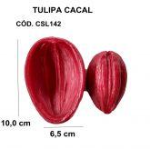 TULIPA CACAL