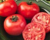 Tomate gaucho grande frete gratis