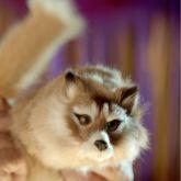 Raposa (Fox spring) #1454