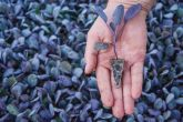 Muda de manjericao roxo 10cm