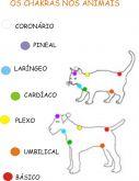 Limpeza e Harmonização de Chacras para animais
