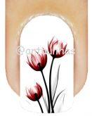 Película Tulipa 09