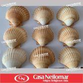 021056 - Concha Shell Especial
