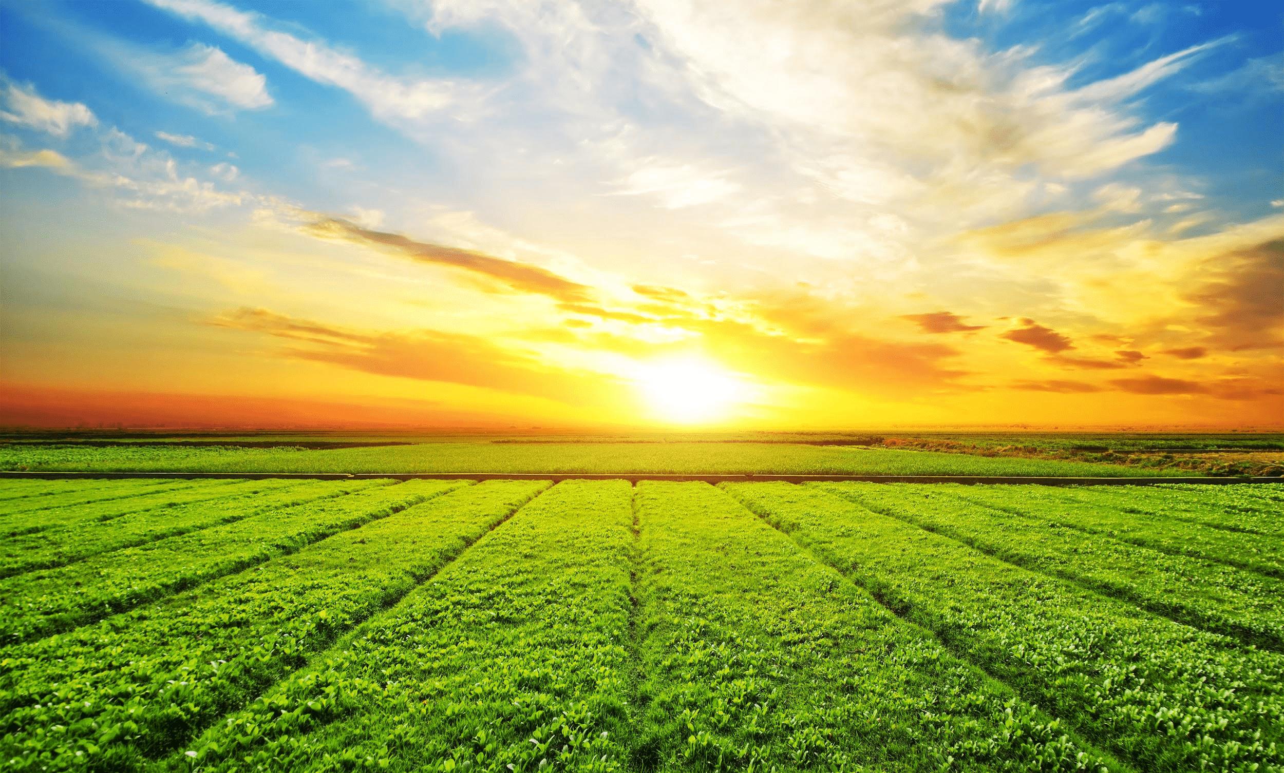 O calor propaga-se do Sol para a Terra por meio da radiação.
