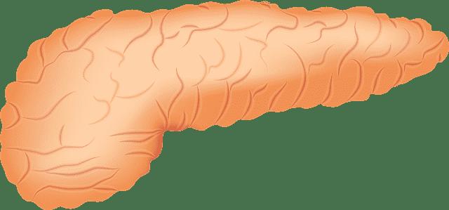Ilustração da parte externa do pâncreas.