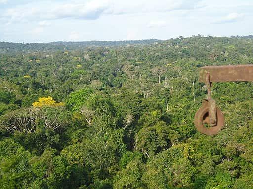 Floresta Amazônica, floresta típica dos climas equatoriais.