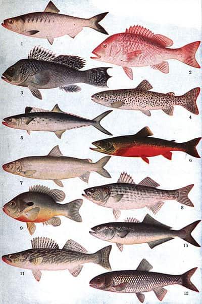 Diversidade entre os Peixes.