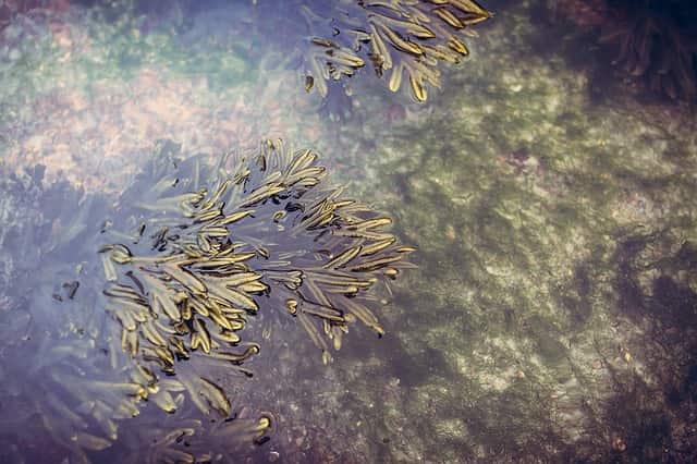 Algas.