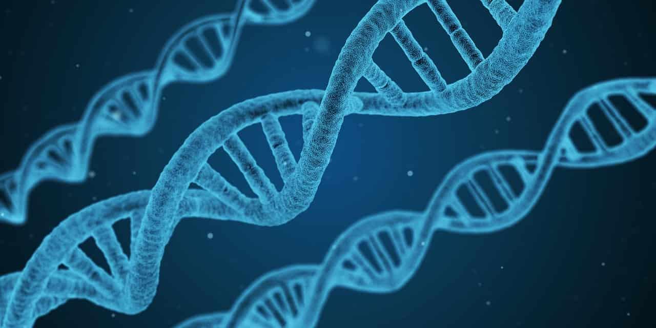 DNA - Ácido Desoxirribonucleico