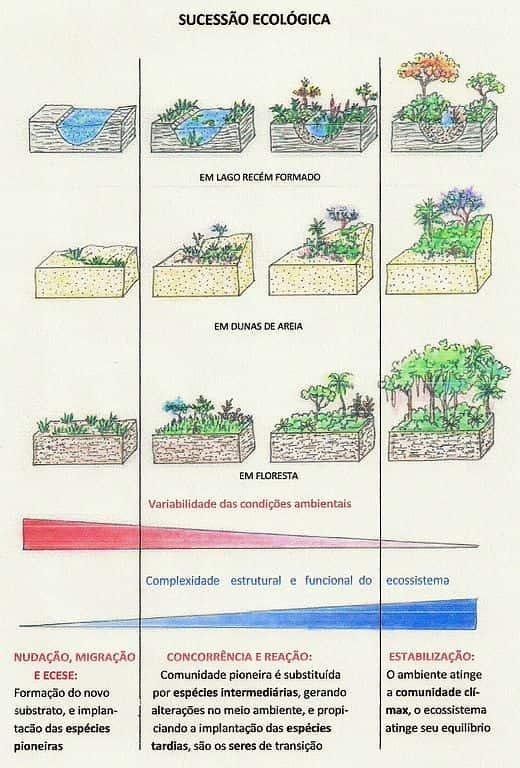 Sucessão Ecológica em três ambientes: Encosta de Rios e Lagos; Dunas de Areias e Florestas.