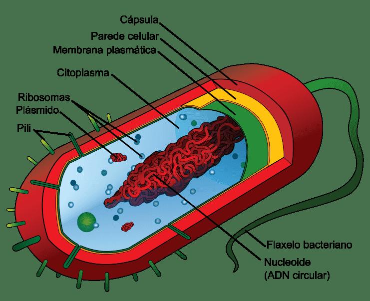Bactéria e seus componentes celulares