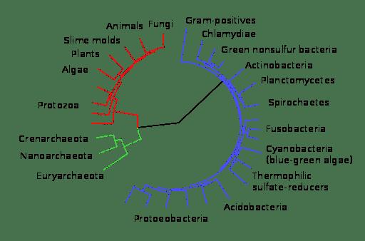 Versão simplificada da árvore da vida mostrando que os indivíduos descendem de um ancestral comum.
