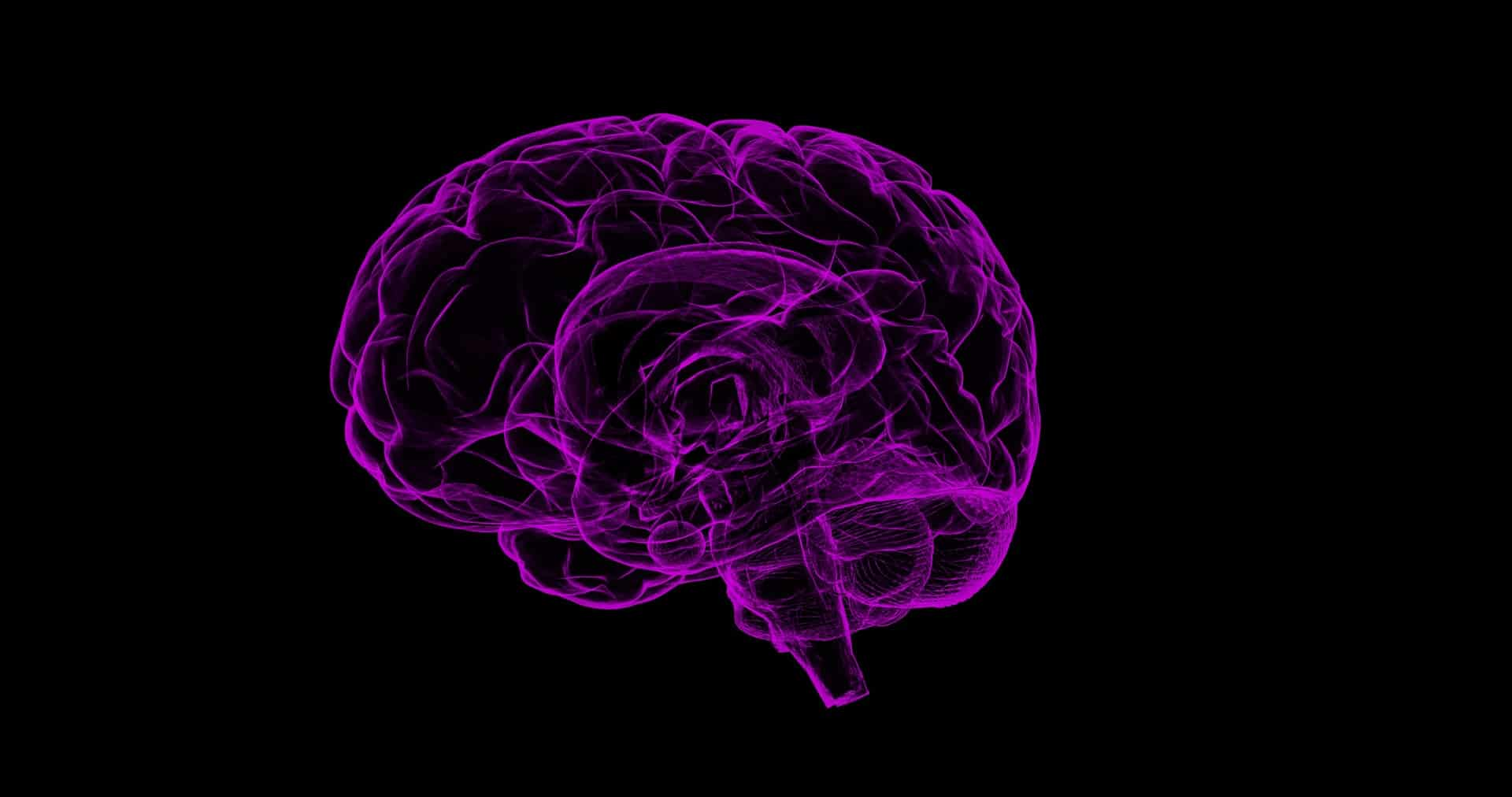 Cérebro.