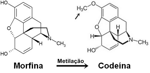Estrutura da morfina que quando metilada (adição de grupos metil CH3) é convertida a codeína.