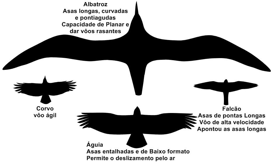 Formato de algumas asas e sua relação com o tipo de voo.