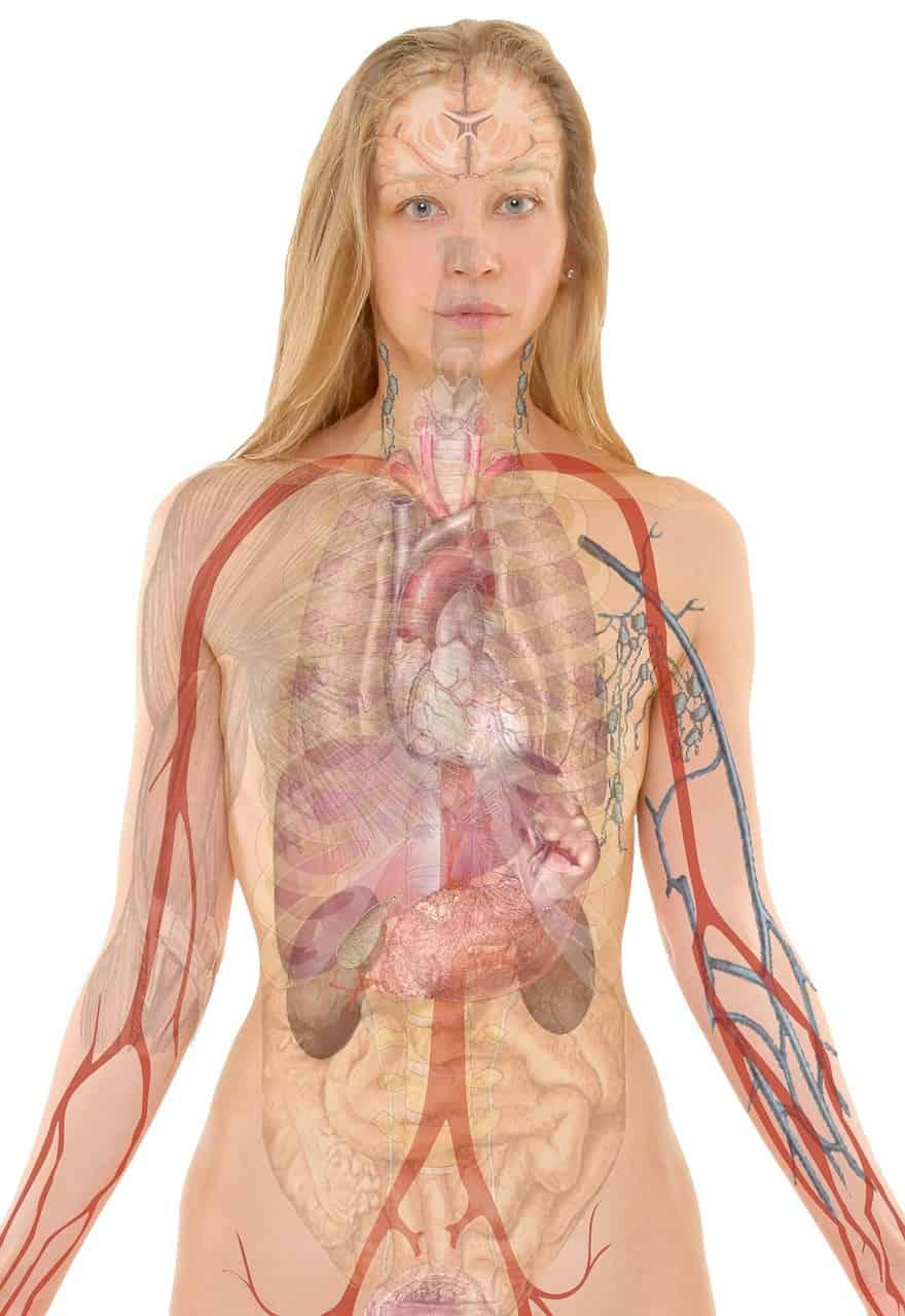Metabolismo é um conjunto de reações químicas que fazem o corpo funcionar.