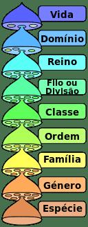 Categorias (táxons) do Sistema Taxonômico.