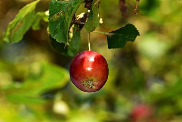 Fruto - Partes da Planta