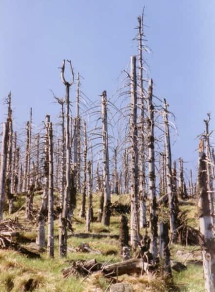 Efeitos da chuva ácida sobre uma floresta.