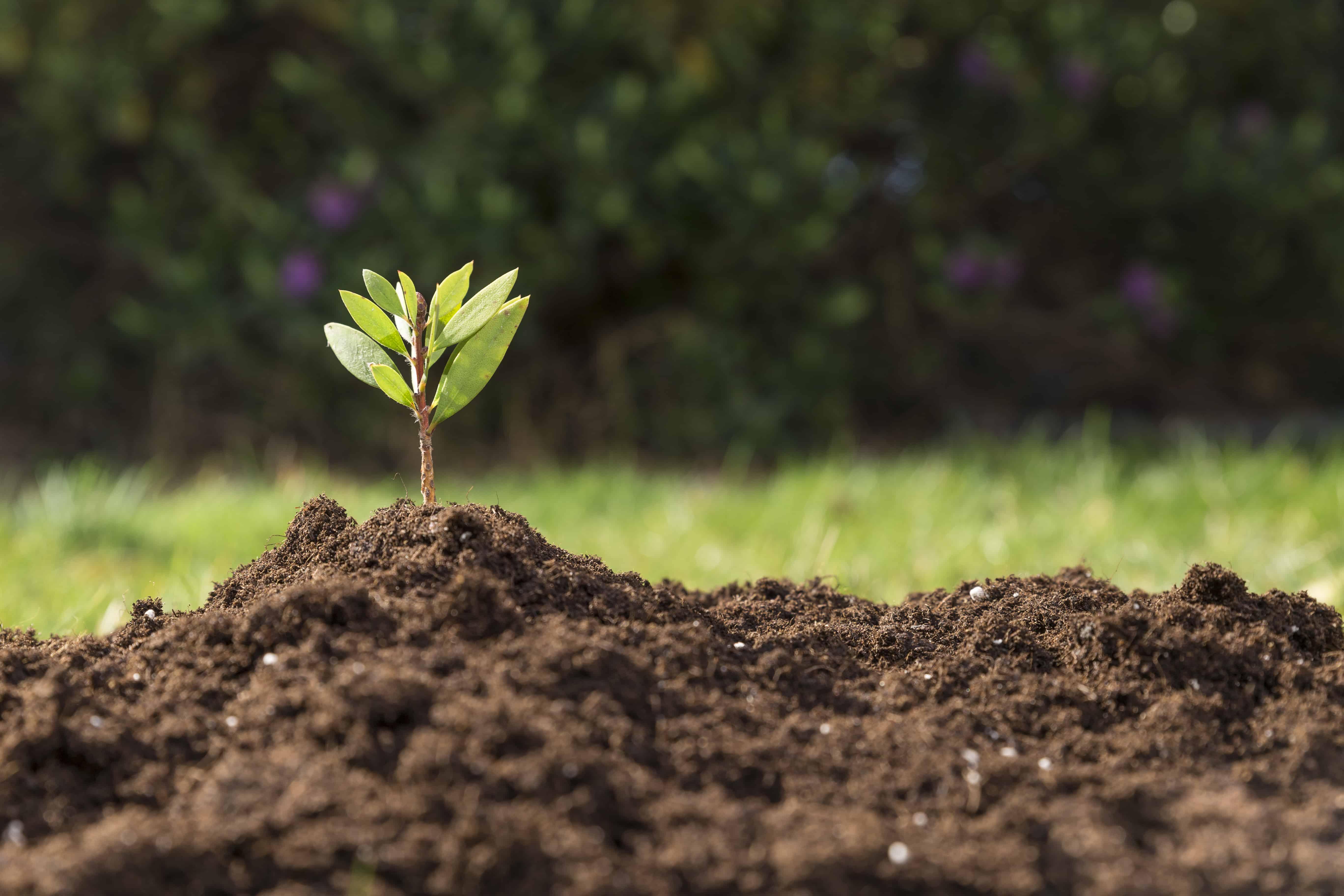 As plantas, seus metabolismos e comportamentos são os objetos de estudo da Fisiologia Vegetal.