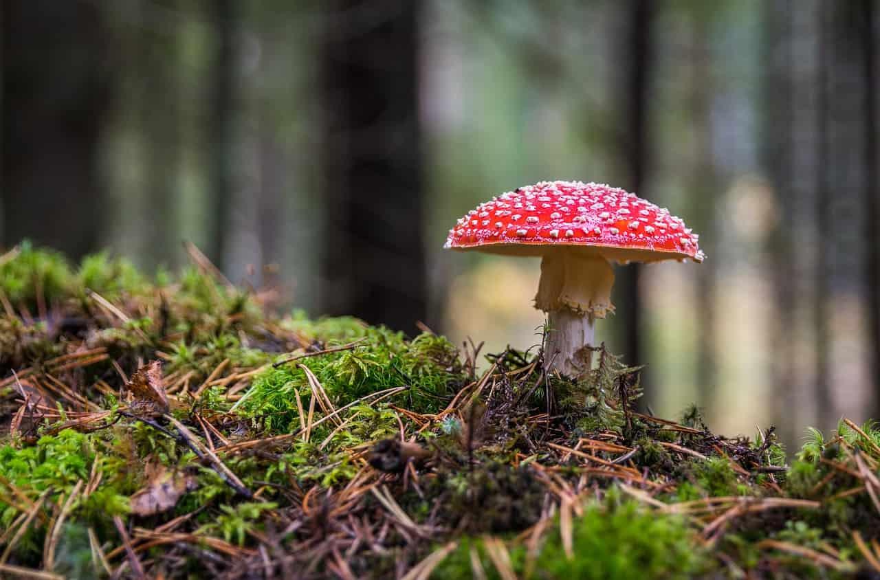 Cogumelos, plantas diversas e animais, como os mamíferos, são exemplos de seres pluricelulares.