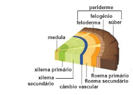 Histologia Vegetal - Tecidos Vegetais