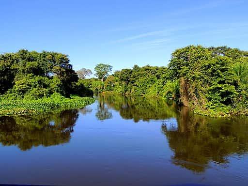Pantanal localizado no Mato Grosso do Sul.