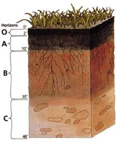 Esquema representando os horizontes do solo.