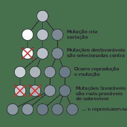 Seleção natural esquematizada para selecionar organismos de coloração escura.