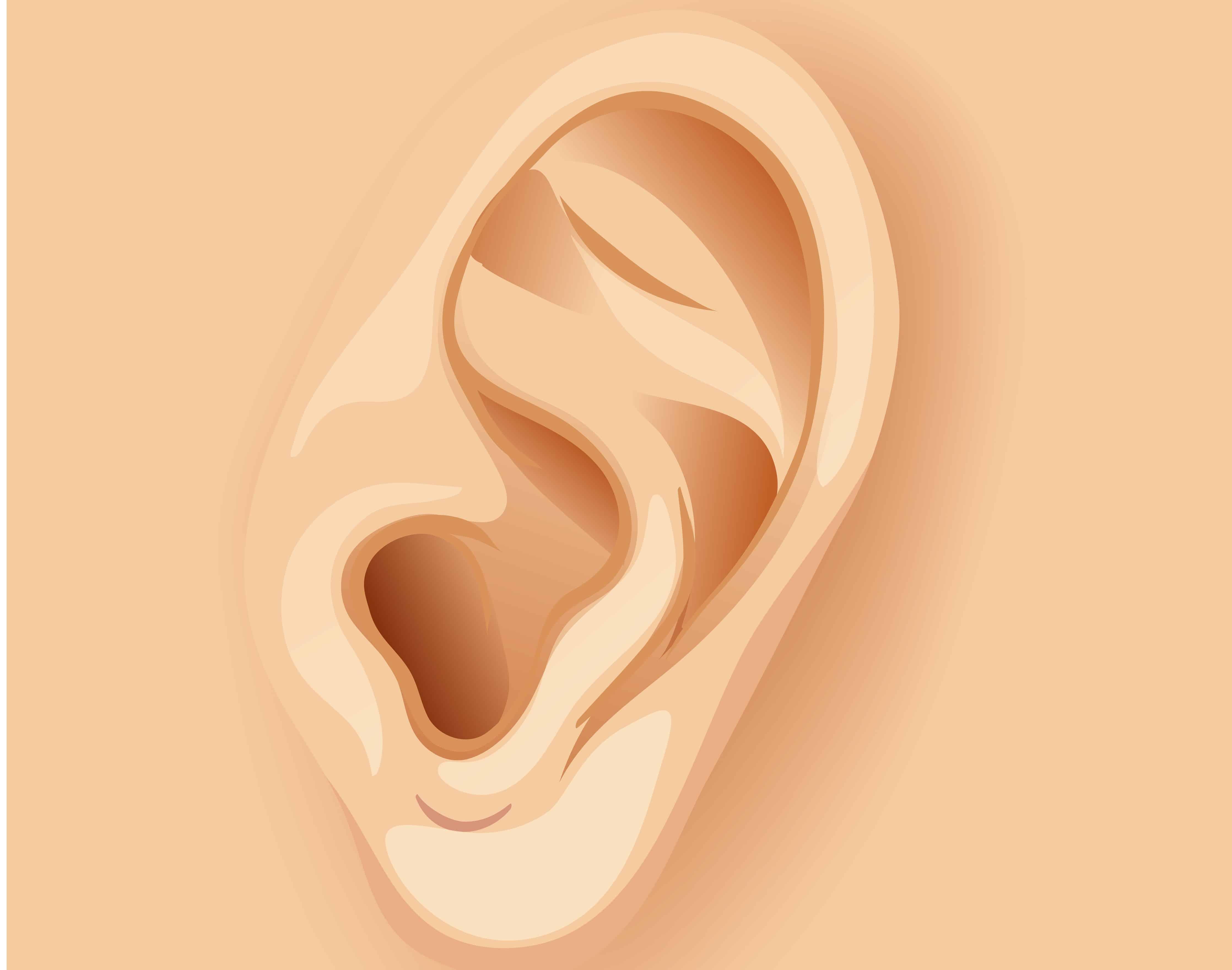 Ouvido e orelha