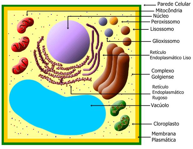 Organelas Celulares Biologia Manual Do Enem