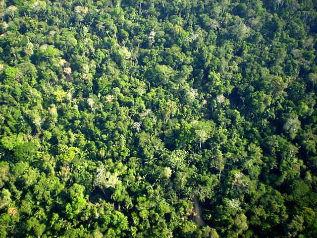 Comunidade e Comunidade Clímax da Floresta Amazônica.