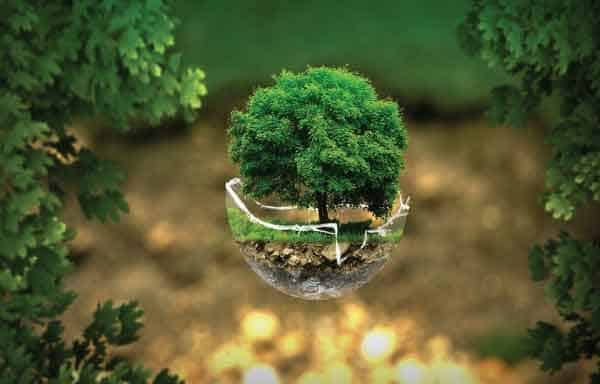 Ecologia Social, Econômica e Ambiental