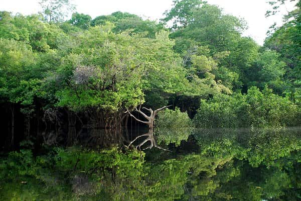 Manaus AM.