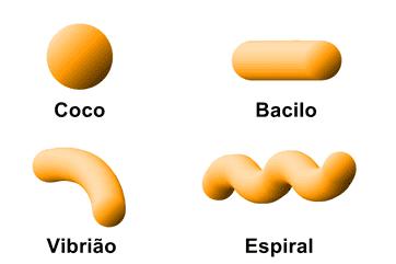 Formato celular característico dos procariontes.