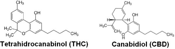 Exemplos de canabinóides mais conhecidos como THC e o CBD.