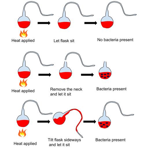 Experimento de Pasteur.