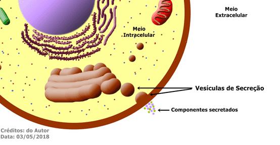 O Complexo Golgiense é responsável por empacotar em vesículas as substâncias que precisam ser secretadas para o meio extracelular.