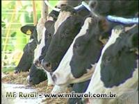 TORTA GORDA DE ALGODÃO 28%PB
